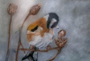 ptak-gosi-int